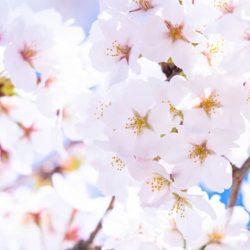 Piękno kwiatów pozostaje niezauważone