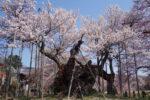 Nihon Godai Zakura